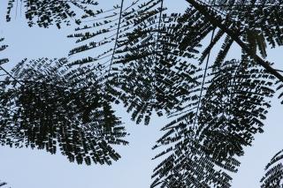 image Leaf-015
