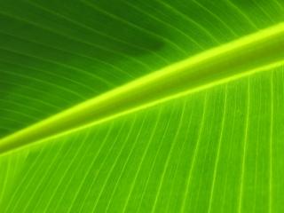 image Leaf-010