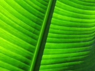 image Leaf-012