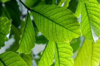 image Leaf-013