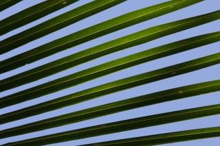 image Leaf-014