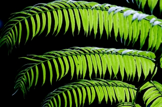 image Leaf-007