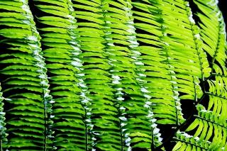 image Leaf-008